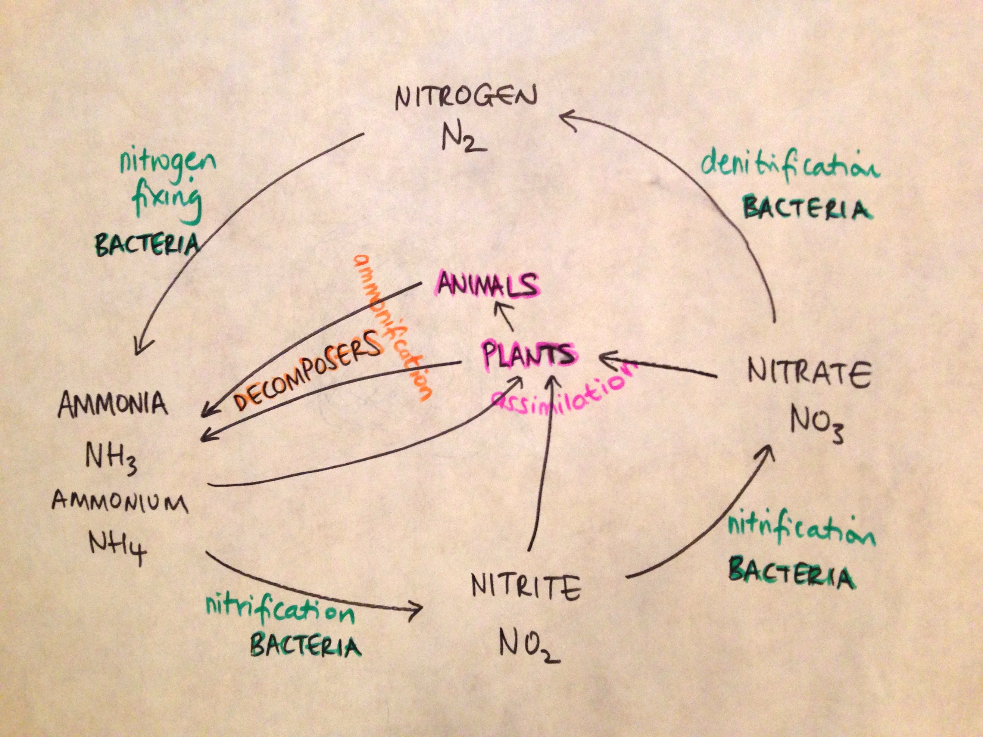 Nitrogen Cycle With Molecular Modelling