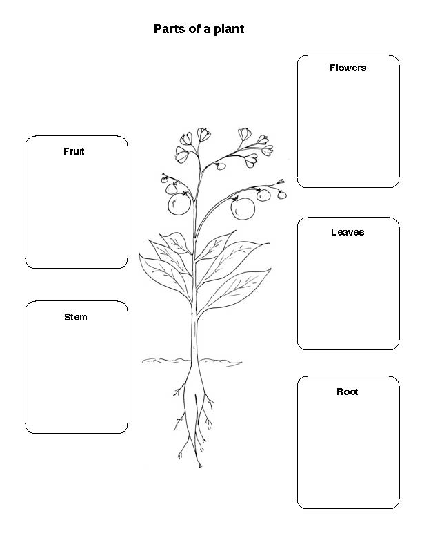 Printables Parts Of A Plant Worksheet which parts of the plant do we eat ingridscience ca image
