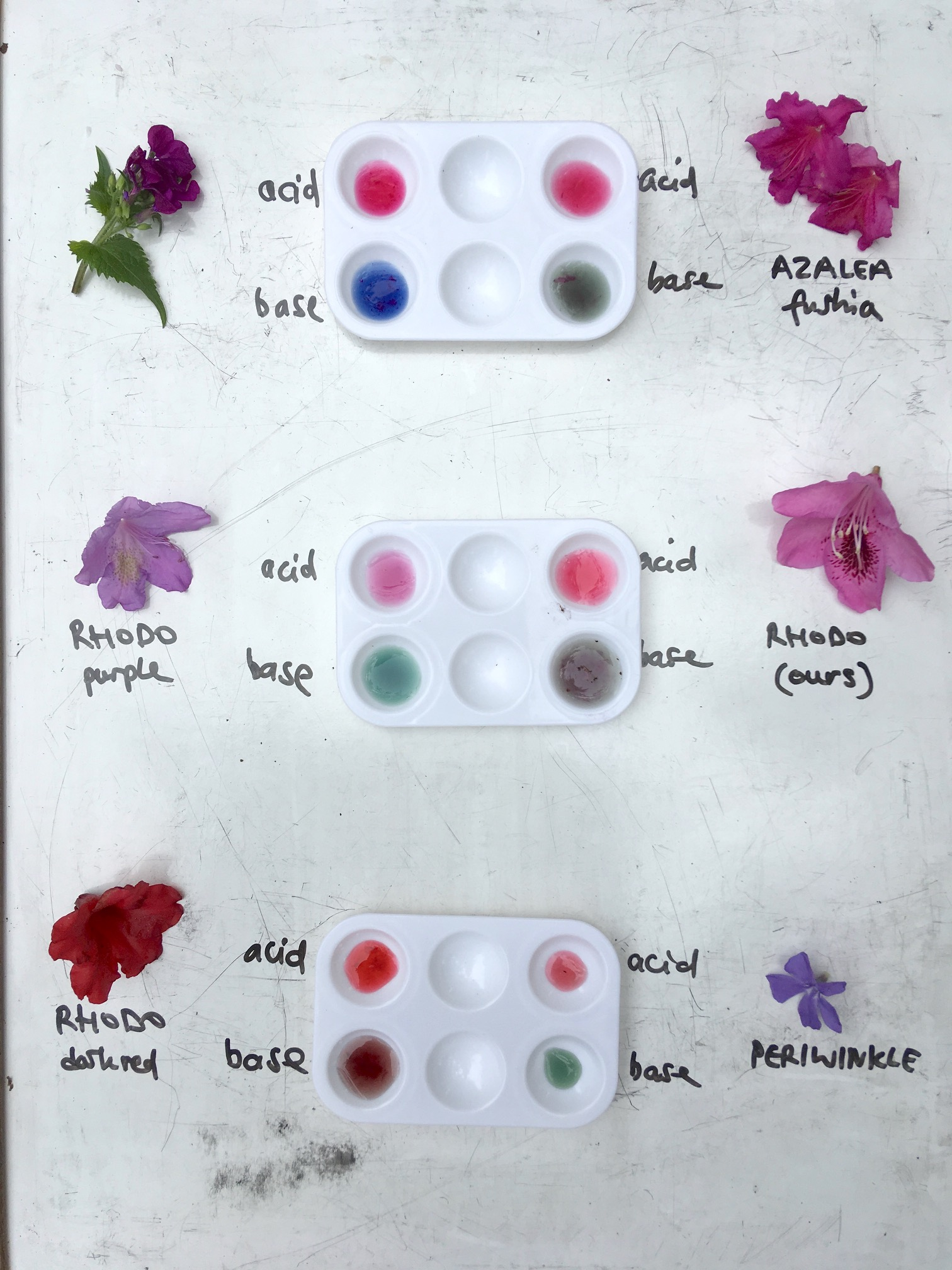 Flower Colours Rose Diagram Lesson One Anatomy Lessons Activity Is In Plant
